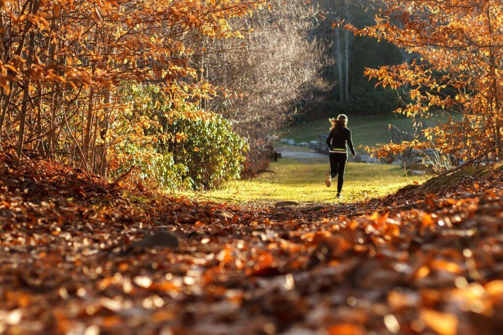 Wald Sport